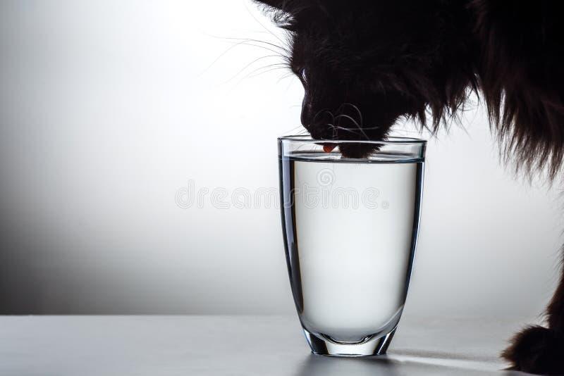 Foto av kattdricksvatten fotografering för bildbyråer