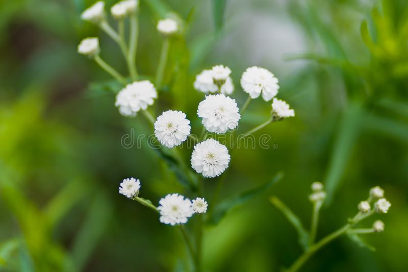 Foto av vita blommor mot en gräsbakgrund i mjuk fokus arkivbild