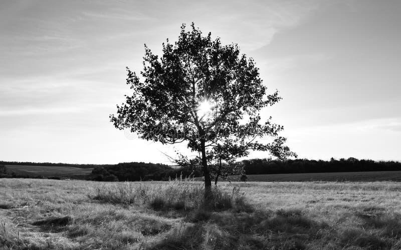 Foto in bianco e nero di paesaggio con l'albero solo immagine stock libera da diritti