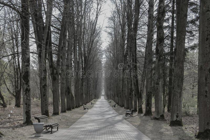 Foto in bianco e nero di un vicolo nel parco fotografie stock