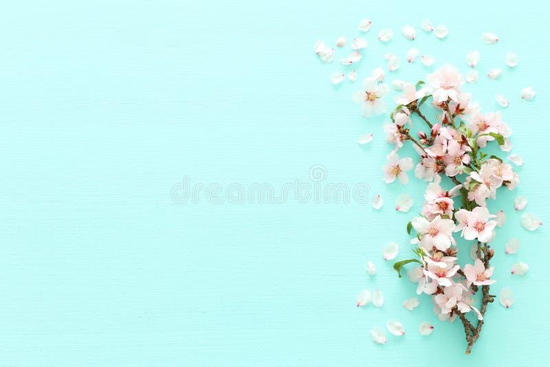 Foto Blütenbaums des Frühlinges des weißen Kirschauf tadellosem hölzernem Pastellhintergrund Ansicht von oben, flache Lage stockfoto