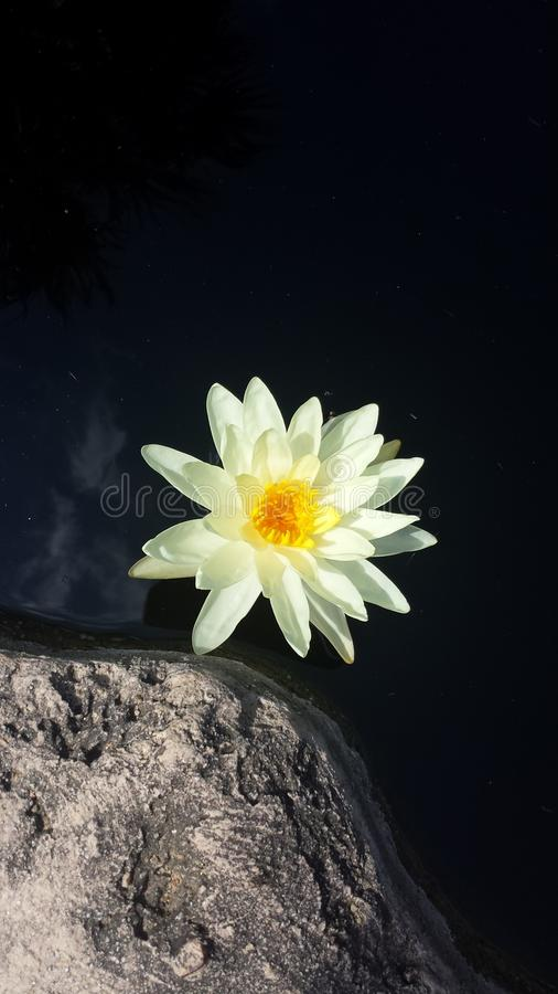 Foto bonita da natureza da flor branca imagens de stock royalty free