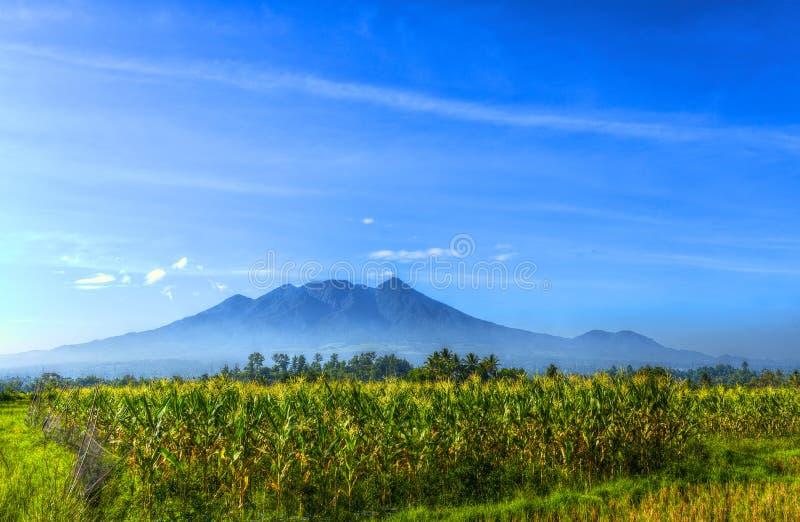 Foto bonita da paisagem da montanha na manhã do campo de milho com o céu azul limpo imagens de stock