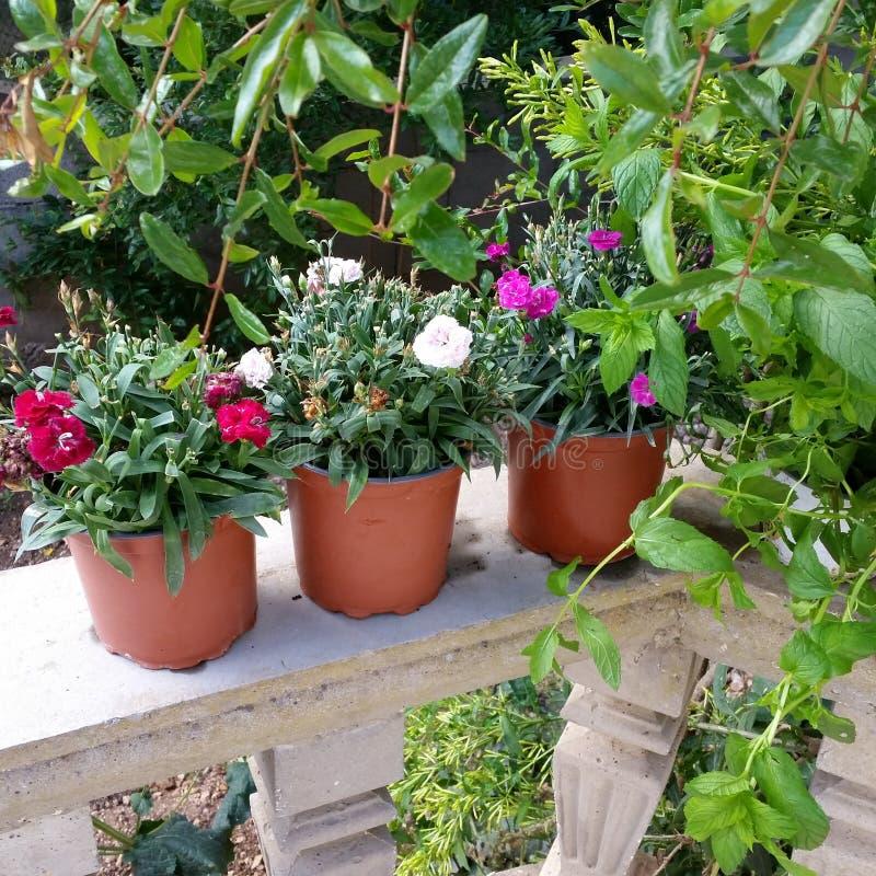 Foto bonita das flores imagens de stock