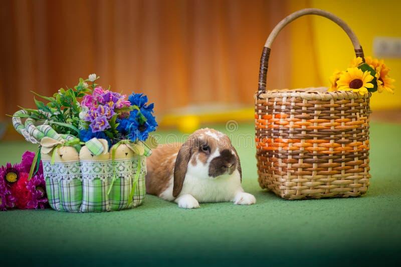 Foto bonito do coelho Fundo animal foto de stock royalty free