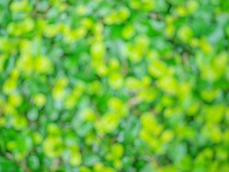 Foto borrada sumário da folha verde minúscula imagens de stock