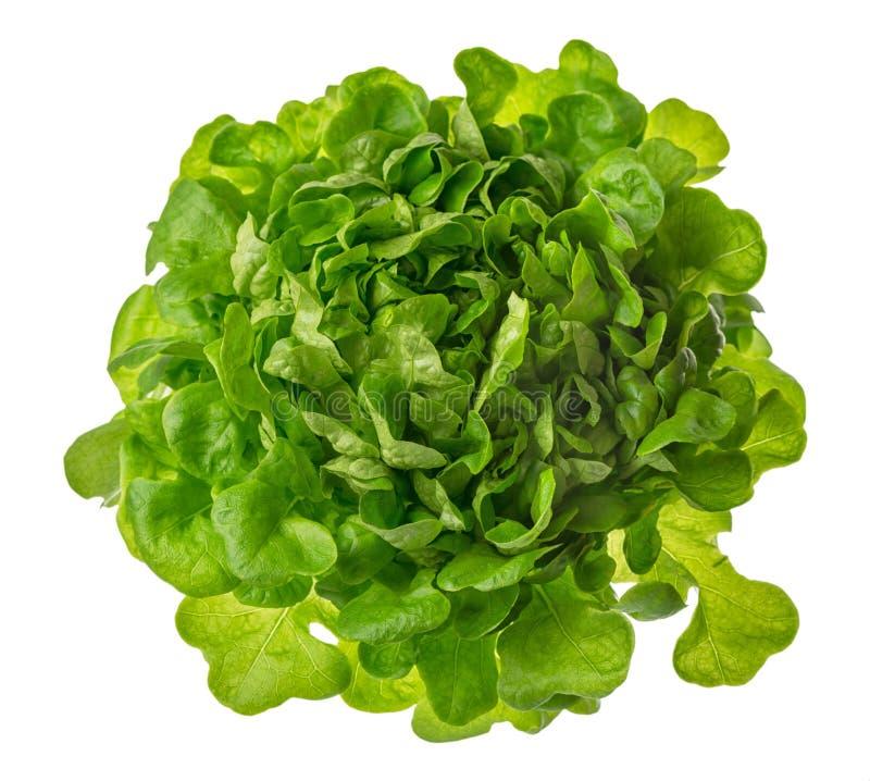 Foto capa della lattuga di Butterhead o dell'insalata di verde isolata sulla b bianca fotografia stock libera da diritti
