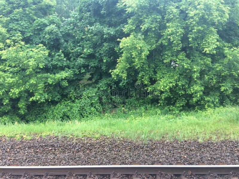Foto colorida da estrada de ferro entre a correia da floresta em um dia ensolarado claro fotografia de stock royalty free