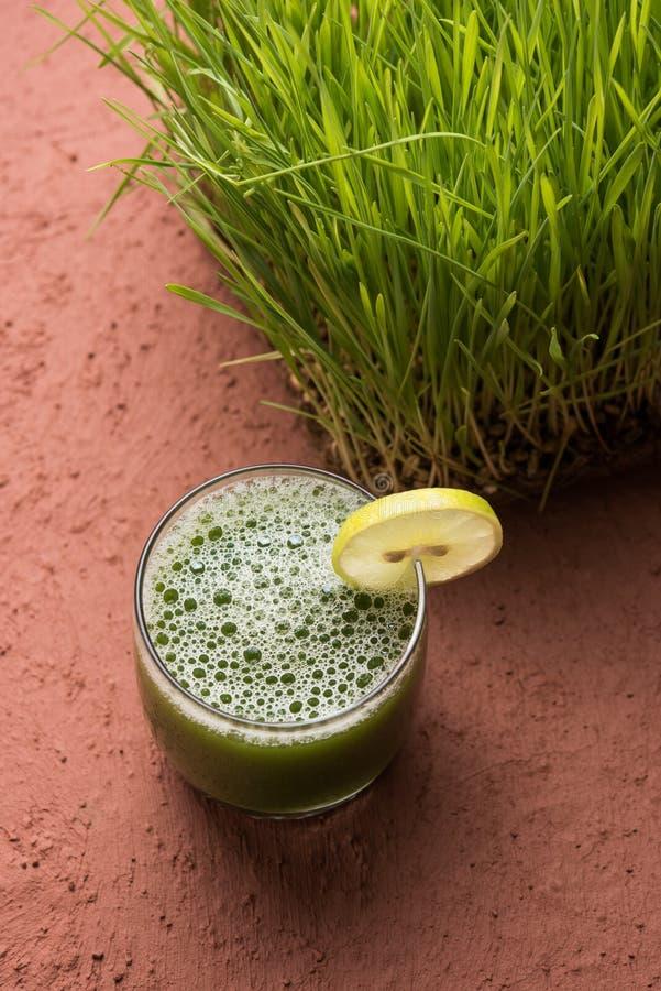 Foto común del jugo de la salud de la hierba del trigo fotografía de archivo