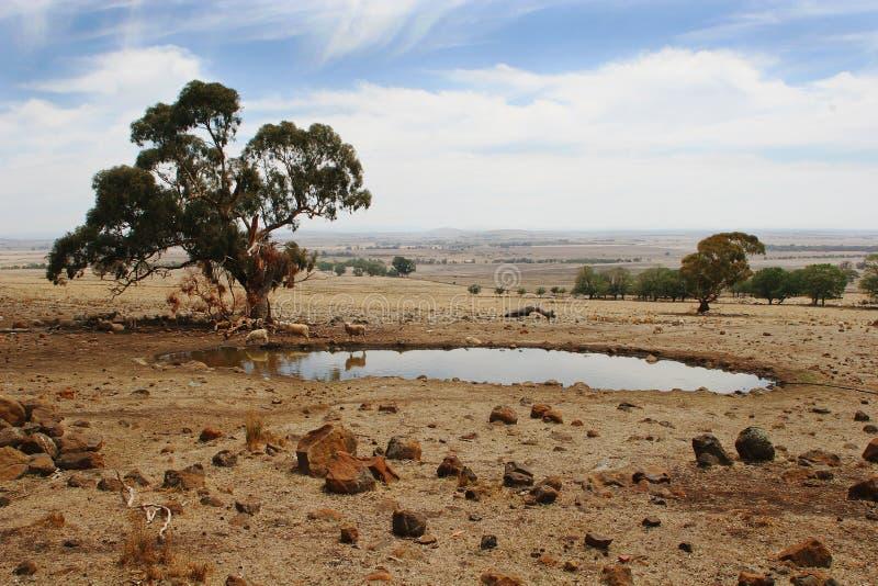 Foto común del paisaje meridional del rancho de Australia fotos de archivo libres de regalías