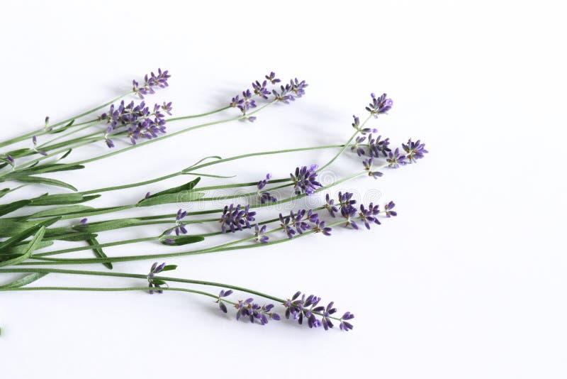 Foto común diseñada Composición floral aún de la vida decorativa Flores frescas de la lavanda aisladas en de madera blanco fotografía de archivo libre de regalías