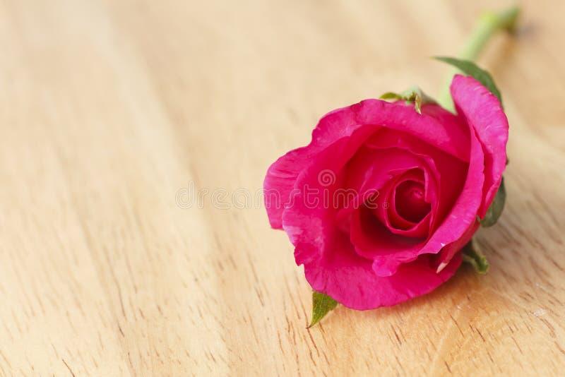 Foto común: Primer hermoso de la rosa del rojo foto de archivo