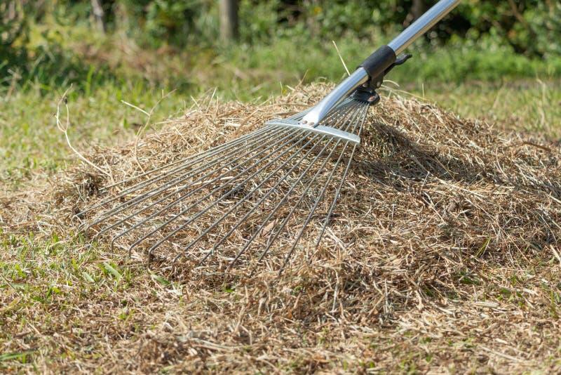 Foto común que limpia la hierba con la aireación y el scari de un rastrillo foto de archivo