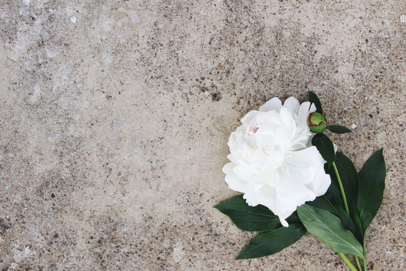 Foto conservada em estoque denominada feminino Composição floral temperamental Flor branca da peônia no fundo do concreto do grun fotos de stock royalty free