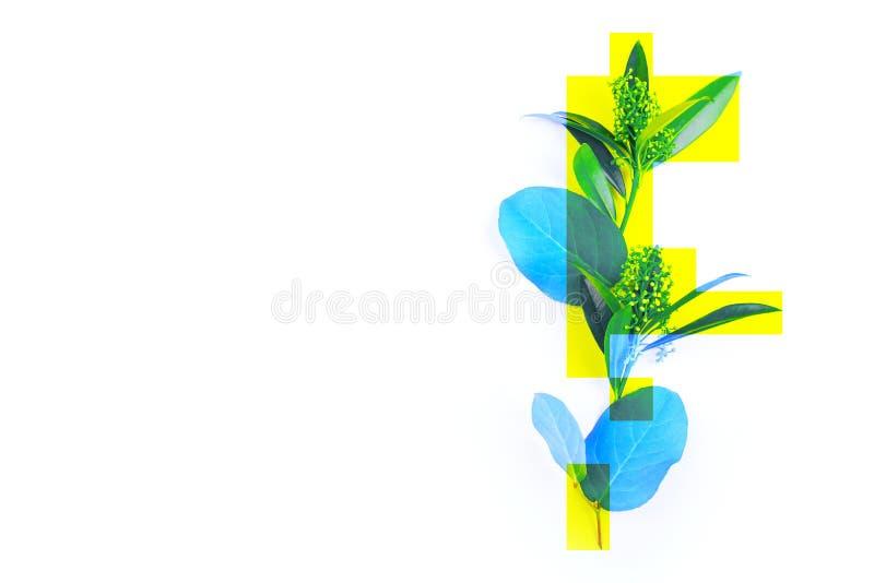 A foto criativa de uma planta, as folhas verdes tingiu azul com retângulos amarelos, abstração, não uma imagem padrão fotos de stock royalty free