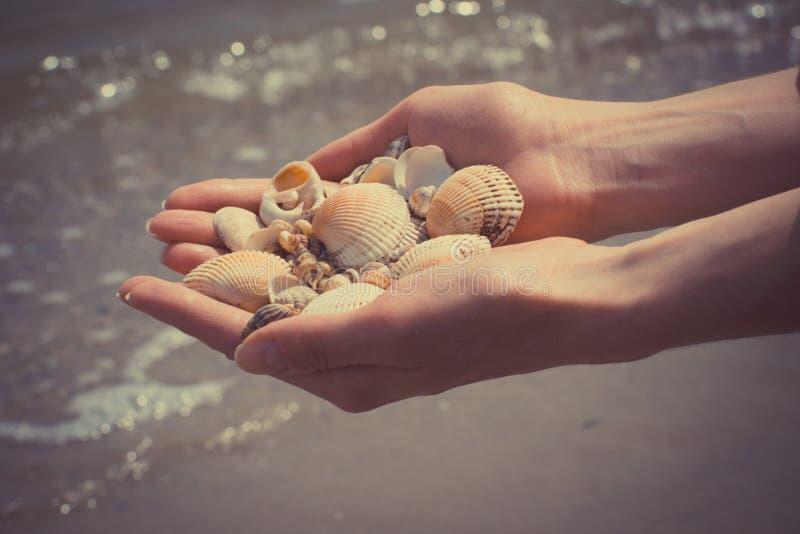 Foto d'annata, conchiglie a disposizione della donna alla spiaggia fotografie stock libere da diritti