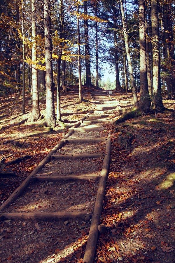 Foto d'annata del percorso di autunno in foresta fotografia stock