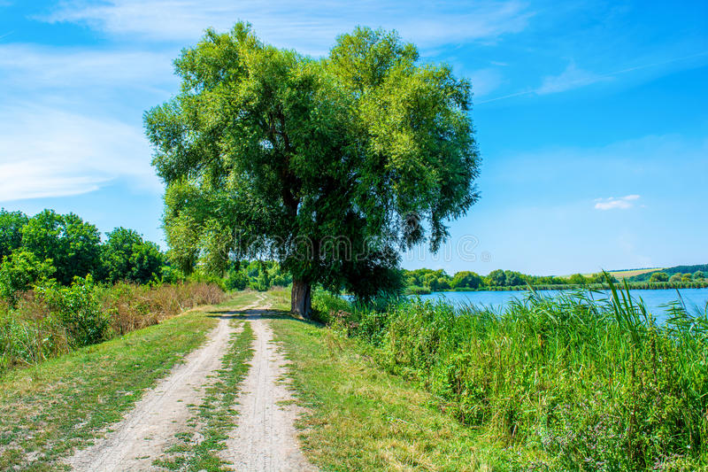Foto da árvore de salgueiro perto do lago azul bonito com estrada fotografia de stock royalty free