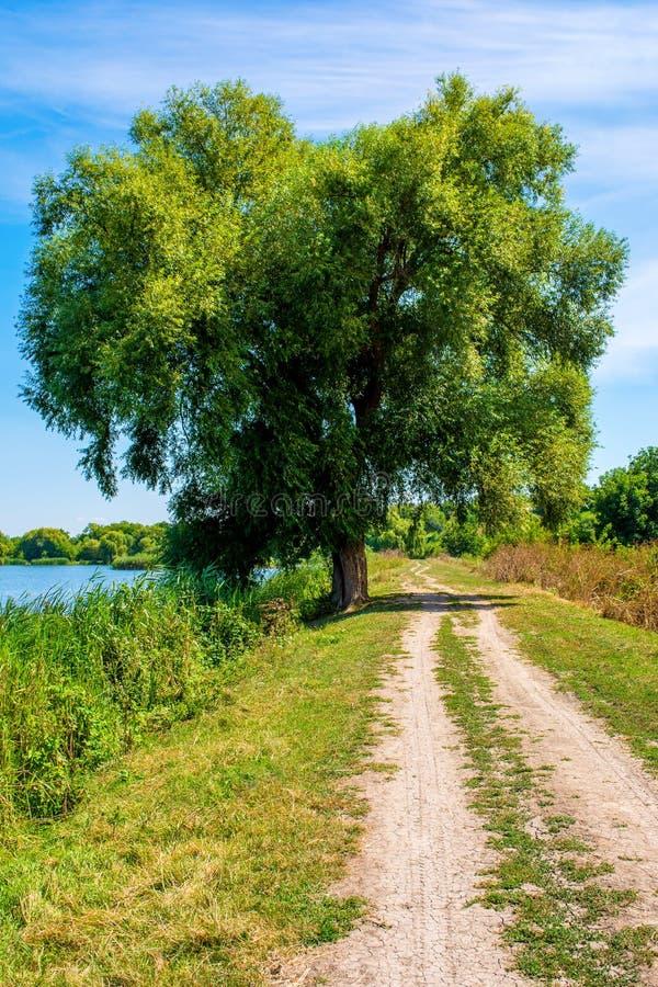Foto da árvore de salgueiro perto do lago azul bonito com estrada foto de stock royalty free