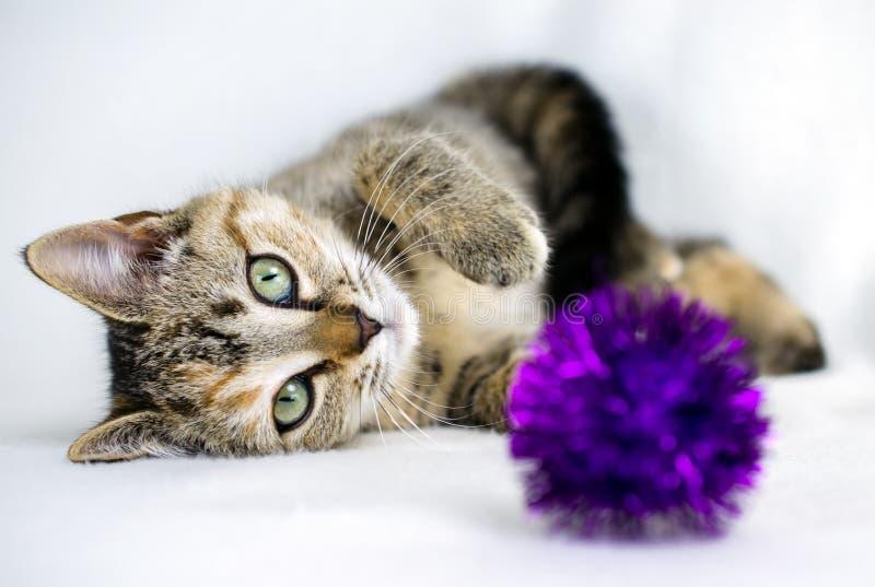 Foto da adoção do gatinho de Tabby Calico, Walton County Animal Control imagem de stock royalty free