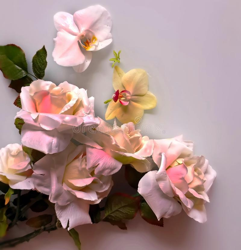 Foto da ilustração do cartão de cumprimentos do ramalhete das rosas do fundo do casamento do dia de Valentine Women bonito das ro foto de stock