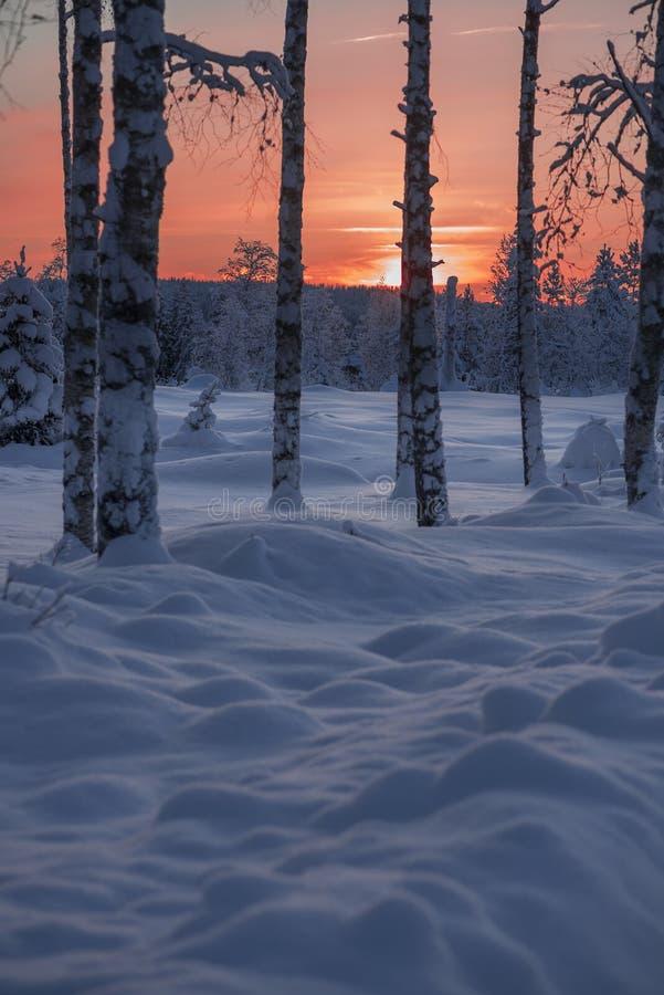 Foto da malikhang LS L'inverno nello svedese Lapponia fotografie stock libere da diritti