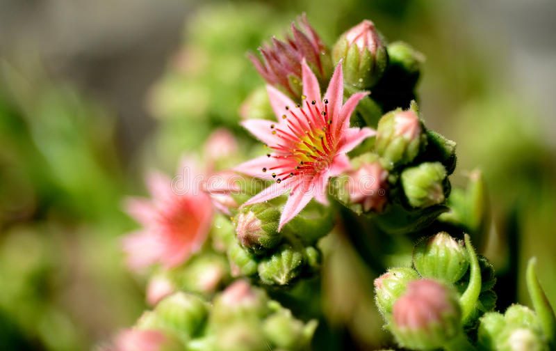 Foto da natureza com flores e plantas fotografia de stock