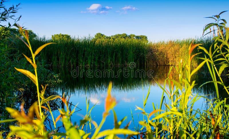 Foto da natureza em torno do lago azul bonito, pescando o lugar fotos de stock royalty free