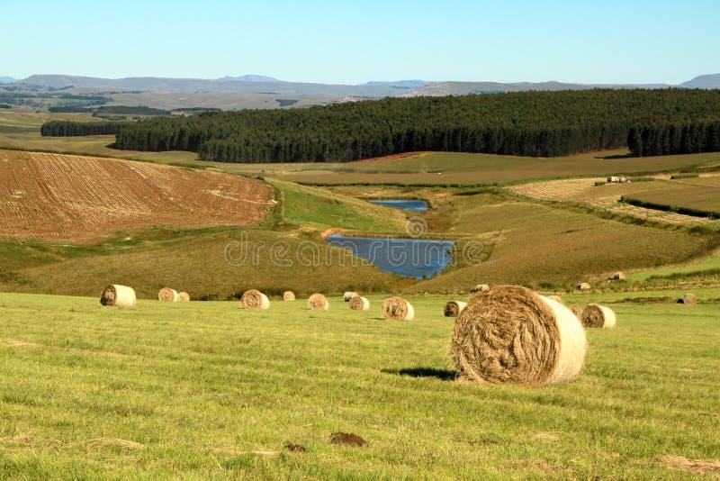 Foto da paisagem de pacotes de feno em um fundo verde fotos de stock