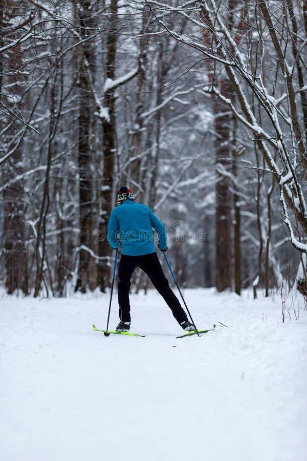 Foto da parte traseira do esquiador do atleta na floresta no inverno imagens de stock