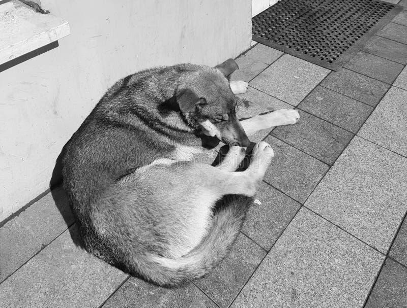 Foto da rua de um cão disperso durante o dia de inverno morno fotos de stock royalty free