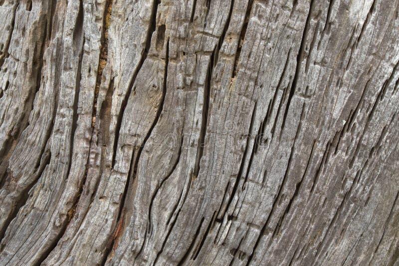 Foto da textura da árvore do fundo da casca de madeira resistida rústica enorme imagens de stock