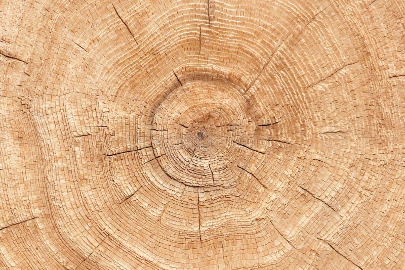 Foto da textura de madeira do tronco de árvore cortado Close-up fotos de stock