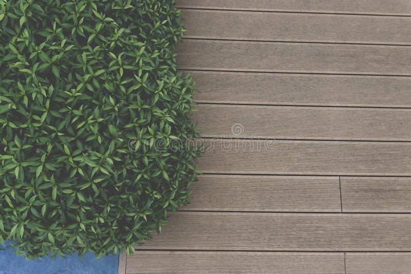 Foto da vista superior, assoalho de madeira da plataforma e folhas minúsculas das hortaliças foto de stock