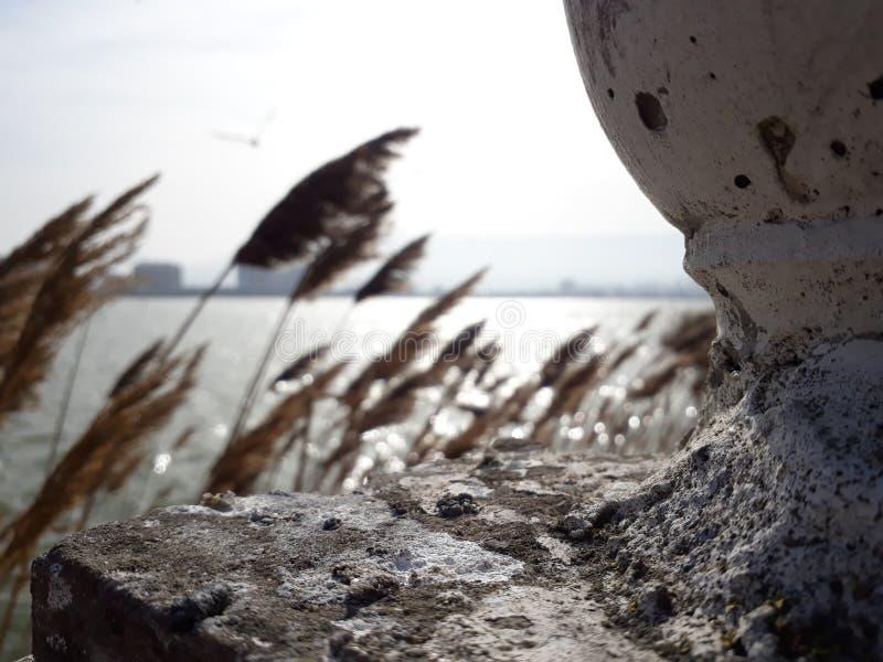 Foto dal lago, da dove l'uccello viene? fotografia stock