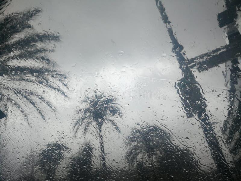 Foto das palmeiras atrás de um vidro imagem de stock