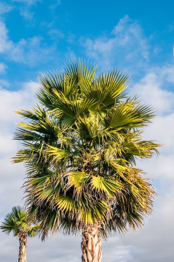 Foto das palmeiras contra o céu foto de stock