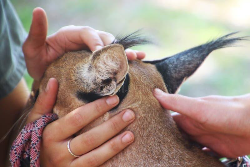 Foto de Closeup de Animal de Pele Marrom imagem de stock