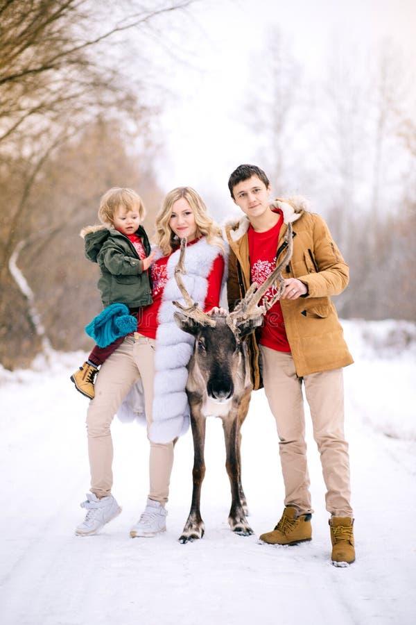 Foto de Disfocus de la familia y de ciervos hermosos en invierno imágenes de archivo libres de regalías