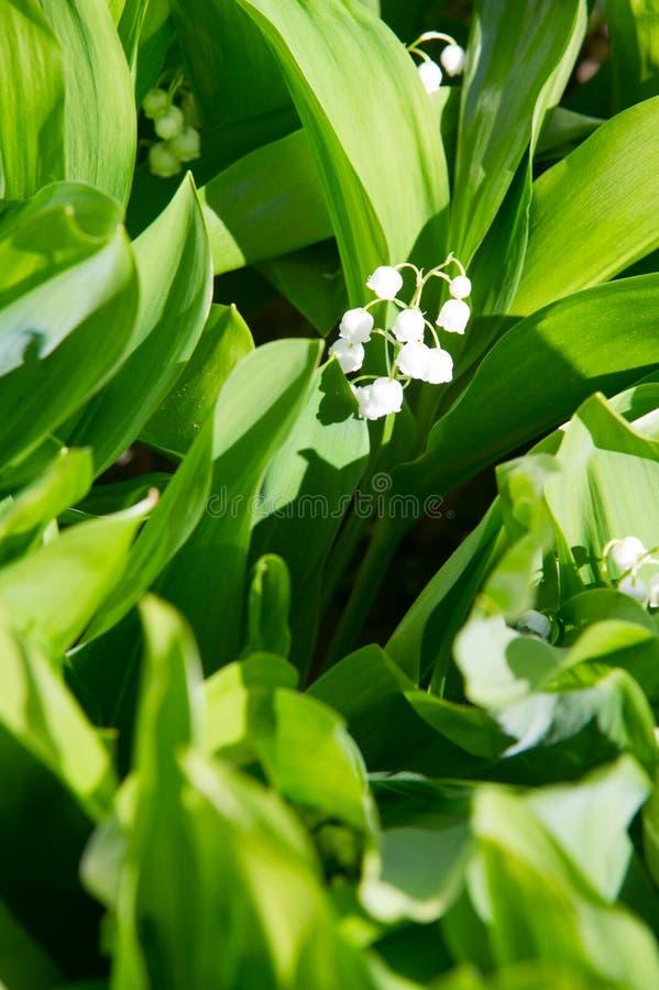 Foto de flores da floresta bracelets fotos de stock royalty free