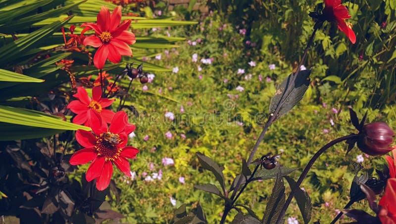 Foto de flores y de plantas de jardín imagen de archivo