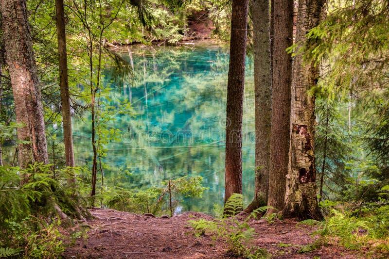 Foto de HDR de um lago ultra claro da mola em uma floresta nórdica fotografia de stock