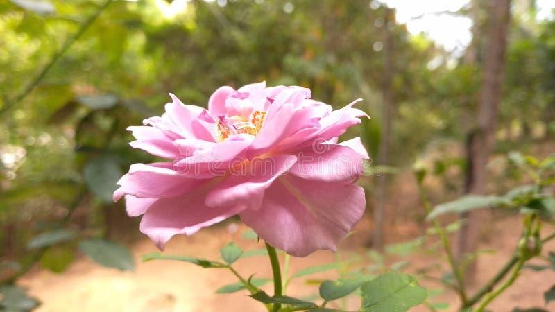 Foto de la flor HD imágenes de archivo libres de regalías
