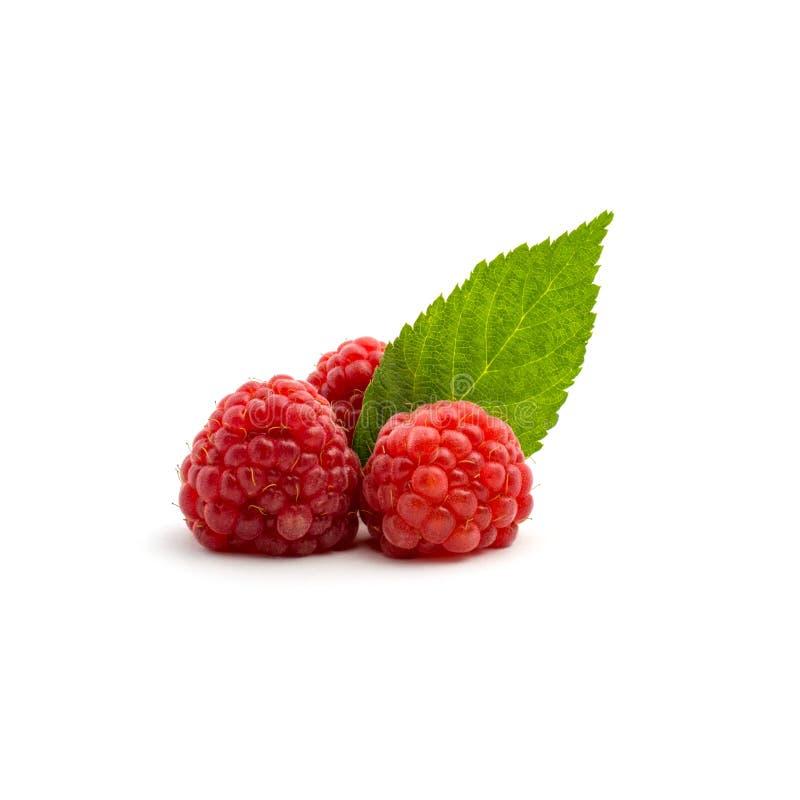 Foto de la frambuesa roja fresca con las hojas aisladas en el fondo blanco foto de archivo