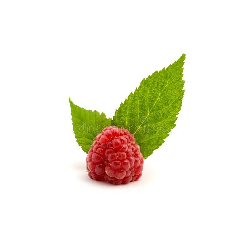 Foto de la frambuesa roja fresca con las hojas aisladas en el fondo blanco imagen de archivo