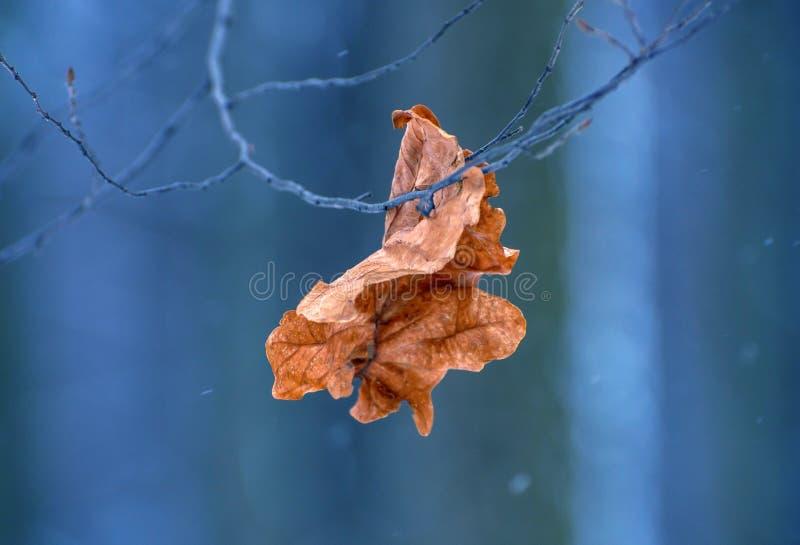 Foto de la hoja seca en el bosque en invierno fotografía de archivo