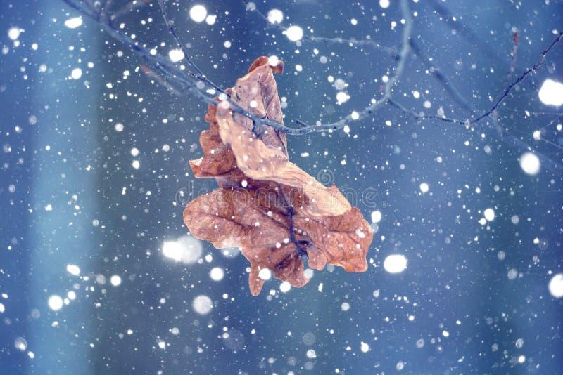 Foto de la hoja seca en el bosque en invierno con nieve que cae imagen de archivo