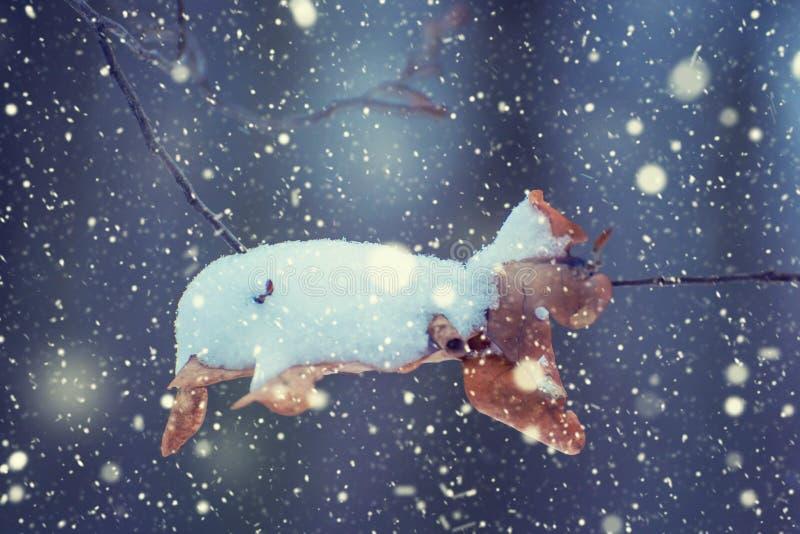 Foto de la hoja seca en el bosque en invierno con nieve que cae fotos de archivo