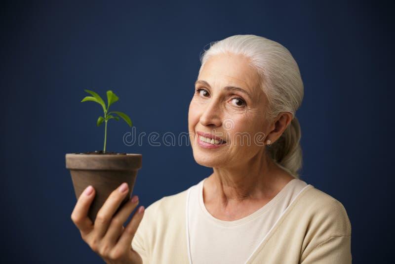 Foto de la mujer envejecida alegre que sostiene la plántula en el punto, lo fotos de archivo libres de regalías