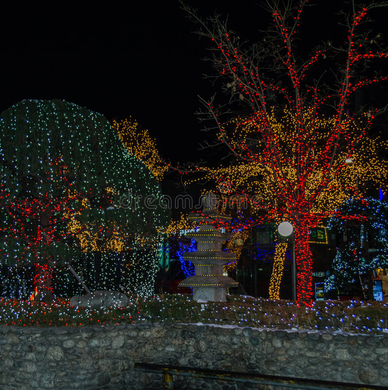 Foto de la noche de los árboles adornados con las luces de la Navidad imágenes de archivo libres de regalías